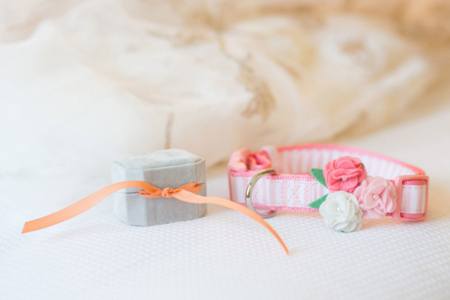 canine ring bearer dog collar baltimore wedding photographer