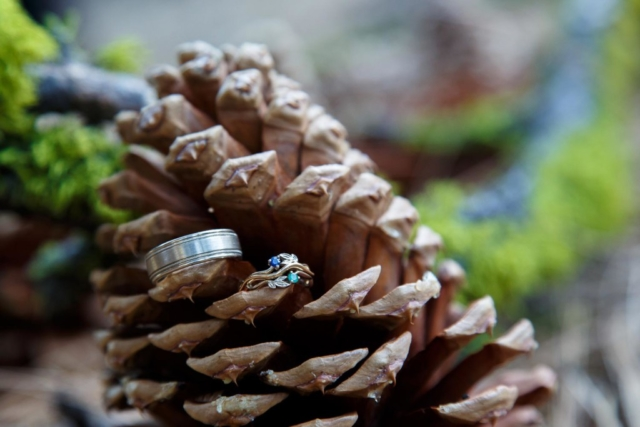 wedding rings pine cone photography